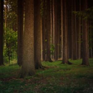 Il Consorzio Cifort  lancia l'e-commerce delle imprese boschive