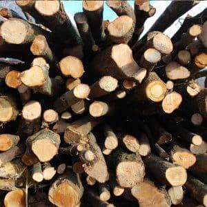 Biomasse legnose per un'energia pulita